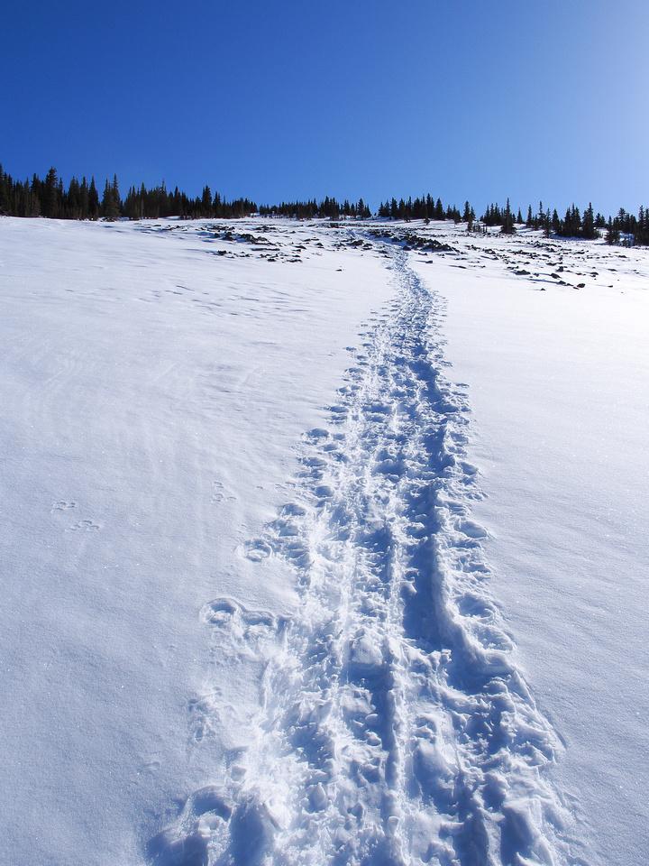 The upper slopes.
