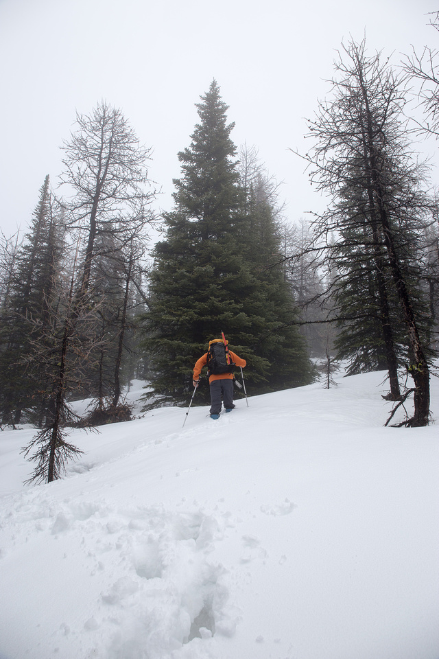 Wietse gets a burst of energy and charges up the trail in deep snow.