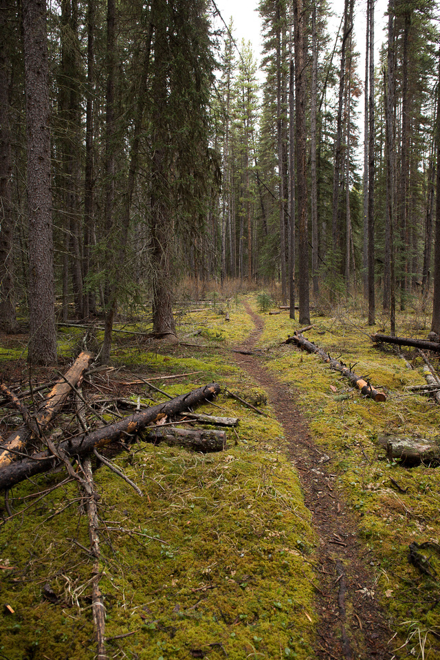 The trail is well traveled and obvious as it winds through the lush spring forest.