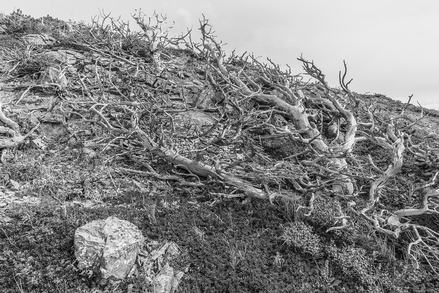 I love these old, twisted up trees.