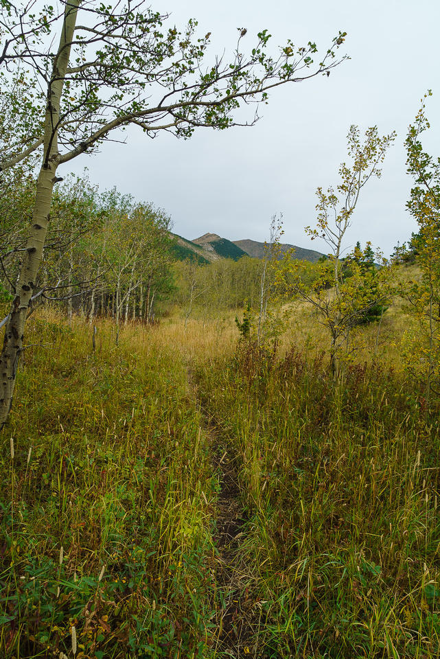 There are enough open meadows on the trail to enjoy the views.