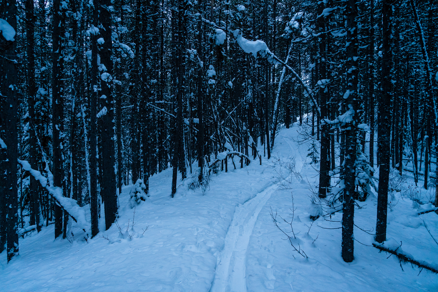 On a broken track up the Twin Lakes trail.