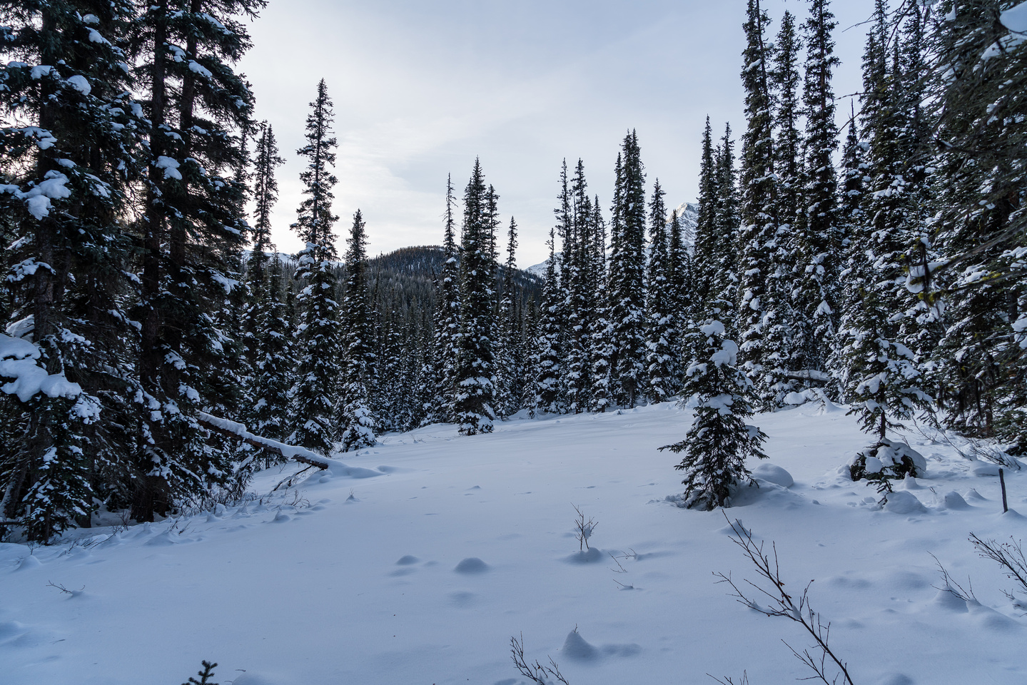 I agreed to start breaking trail up the forested north ridge.