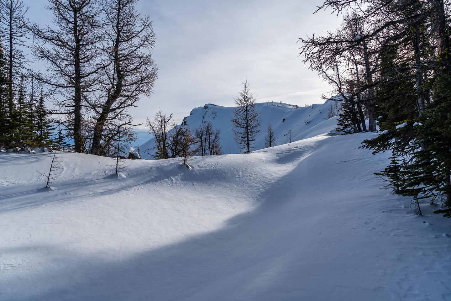 Skiing through larches on the north ridge.