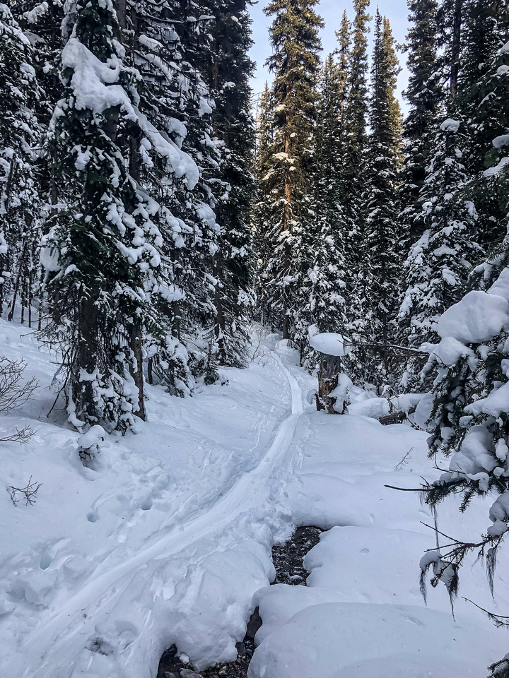 Exiting to the main Twin Lakes trail again.