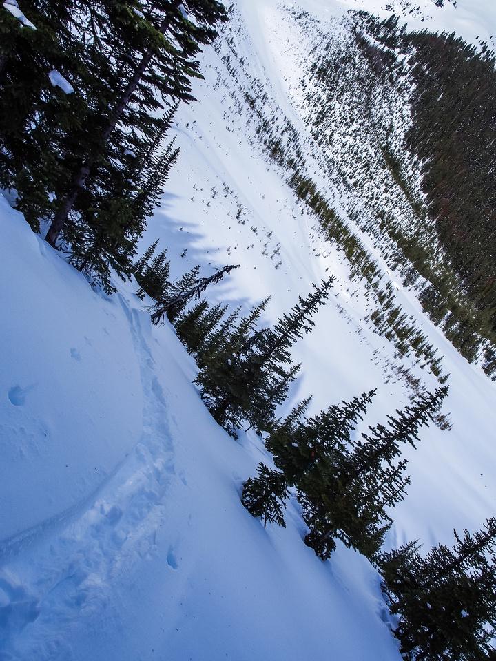 Ascending the steeply treed slopes under the Massive / Brett col.