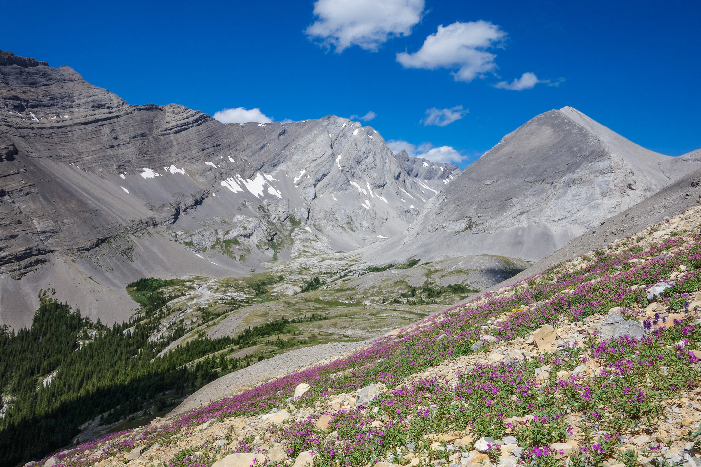 Lots of wildflowers on the scree slopes under the west face. Looking towards James Walker.