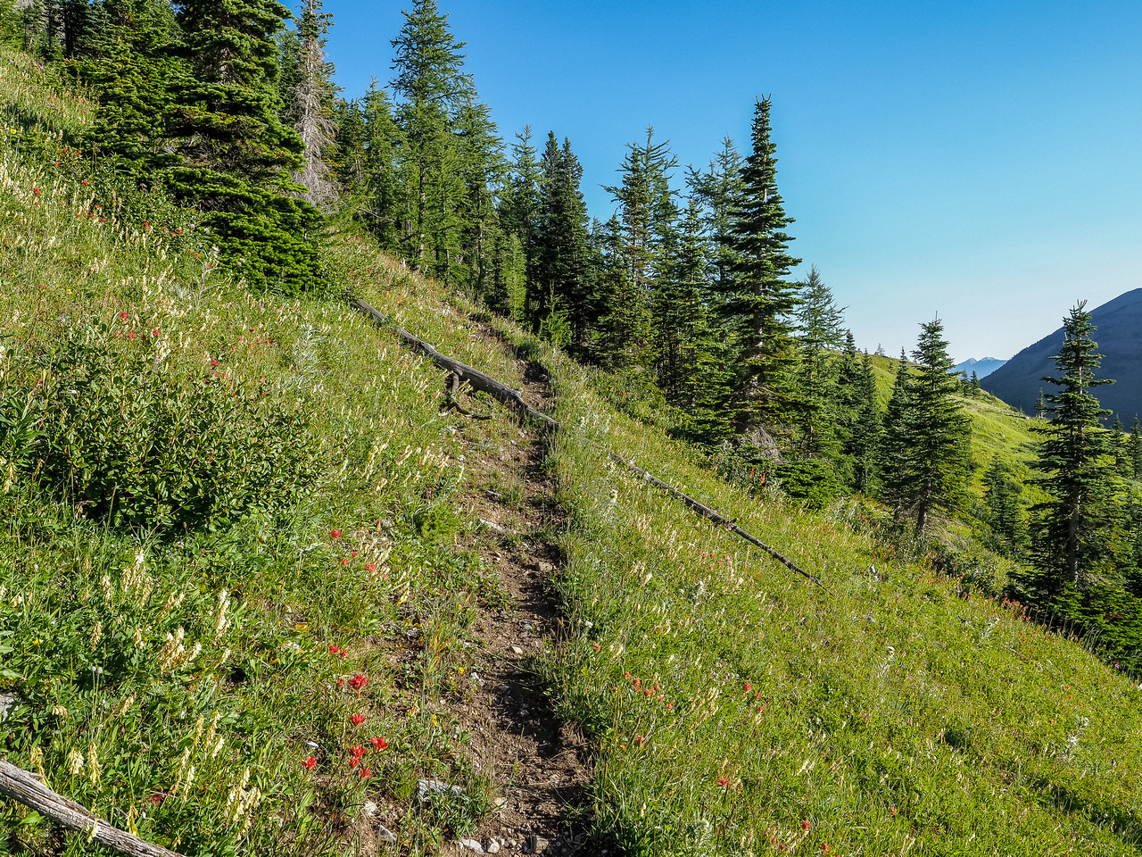 The good trail that will eventually contour around to Hill of the Flowers at right.