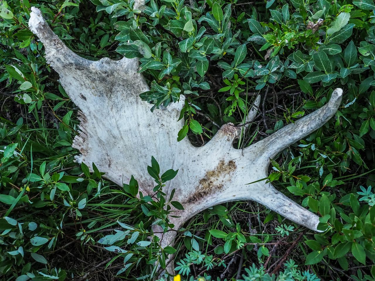 Wildlife detritus.