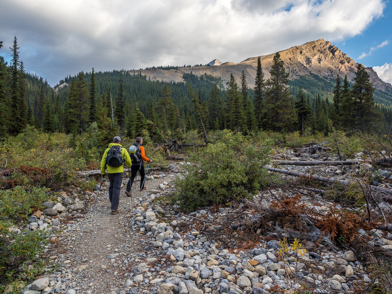 Approaching the drainage on the Mosquito Creek trail near the fresh avalanche debris from the winter of 2016.