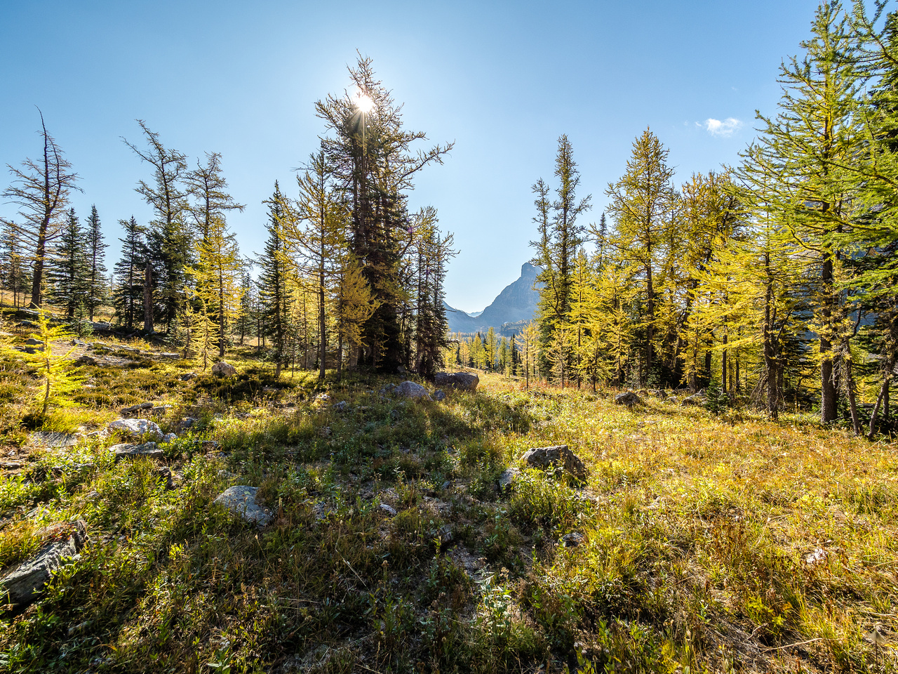 Most of the larches in the upper valley under Pharaoh Peaks were cooperative with the fall theme, unlike their lower elevation cousins.