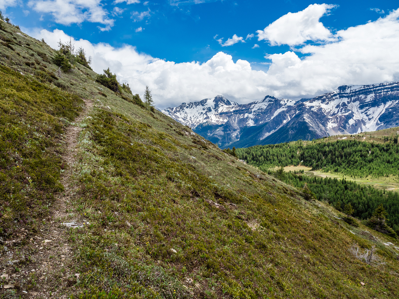 The trail becomes more defined temporarily at the switchbacks. Great views over Citadel Pass at right.