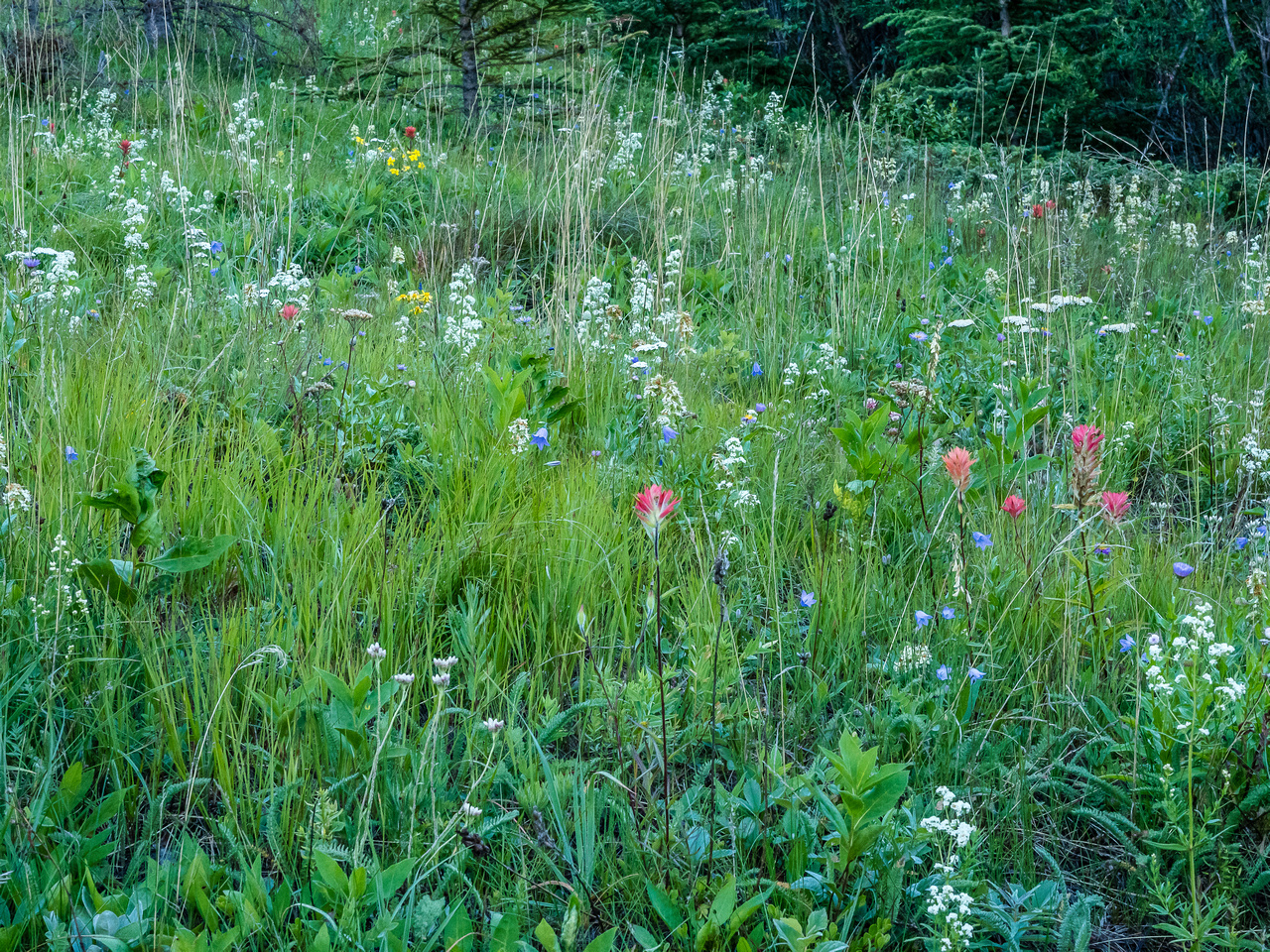 There are a lot more flowers along the trail than 6 weeks ago!
