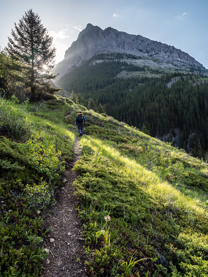 A gorgeous morning on the trail ascending the south banks of Grizzly Creek.