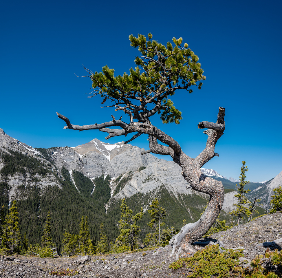 An interesting tree along the ridge.