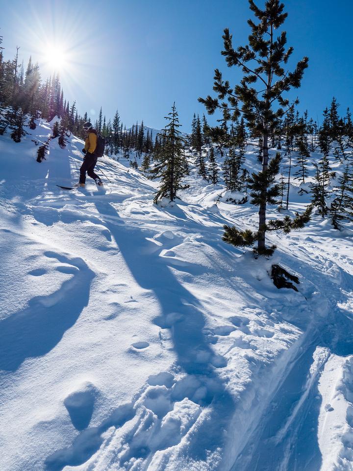 Skiing Christmas trees is always fun.