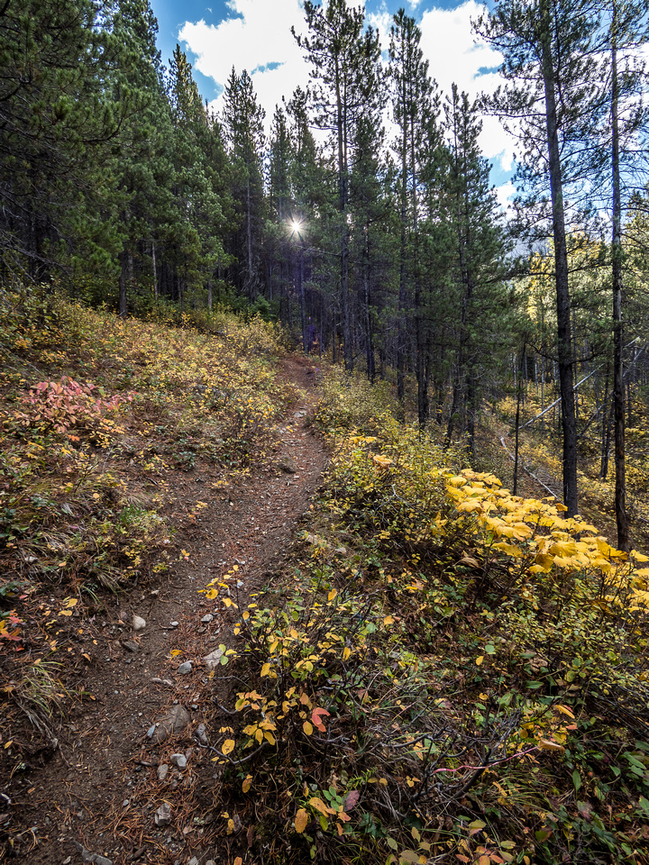 As I work my way up the east ridge the trail becomes very well defined in the thin and dry forest.
