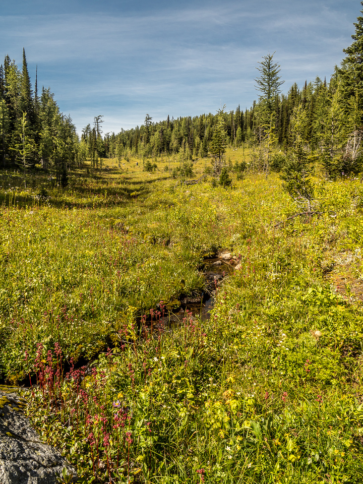 The hiking from Eohippus Lake to Simpson Pass is through open alpine meadows with countless wild flowers and little streams running through them.