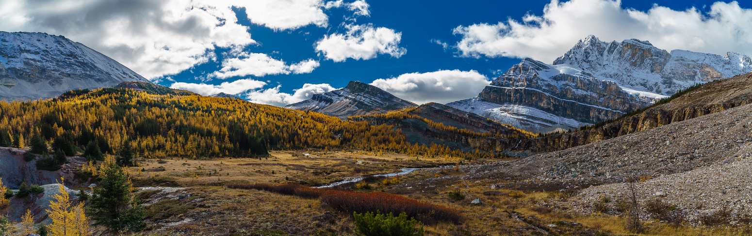 The larch forest under Deception and Packer's Pass comes into view with Packer's Pass Peak at center.