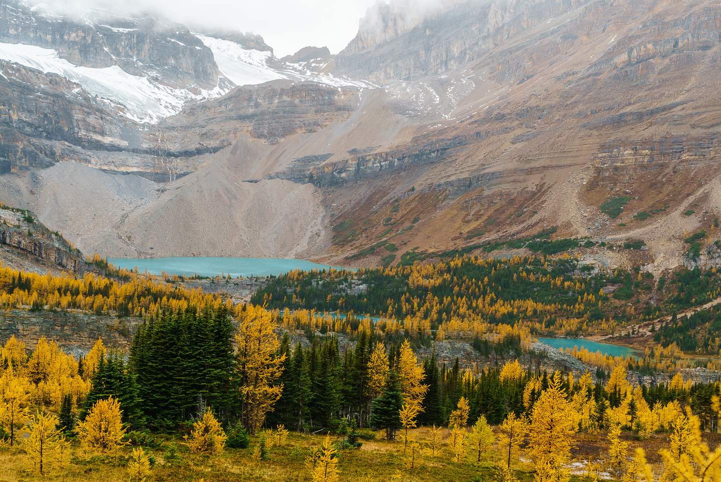 Brilliant fall color around Zigadenus and Myosotis Lakes - we returned via these lakes but the larches were already half done only 1.5 days later thanks to frost and wind!
