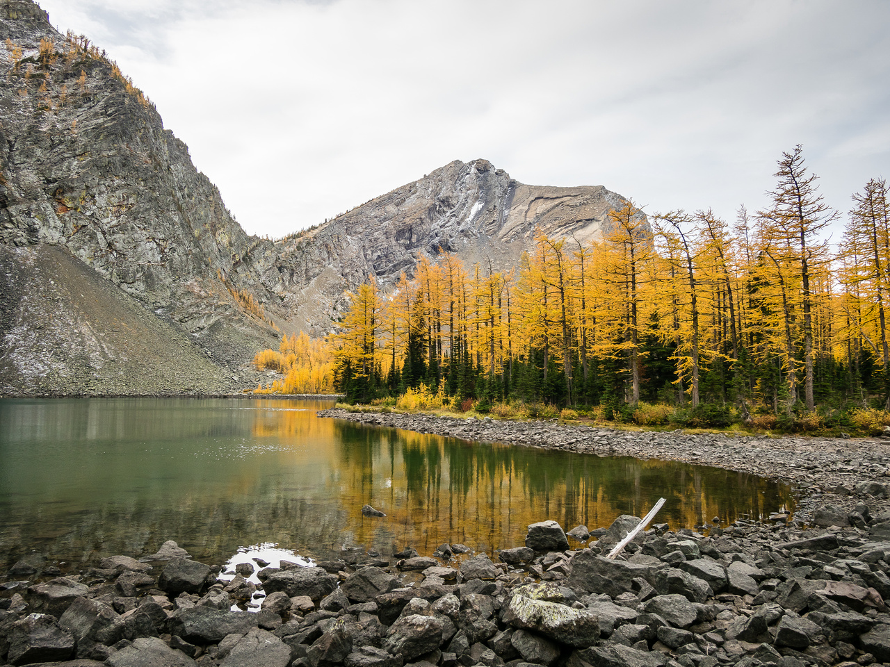 Brilliant larches with Three Lakes Ridge in the background.