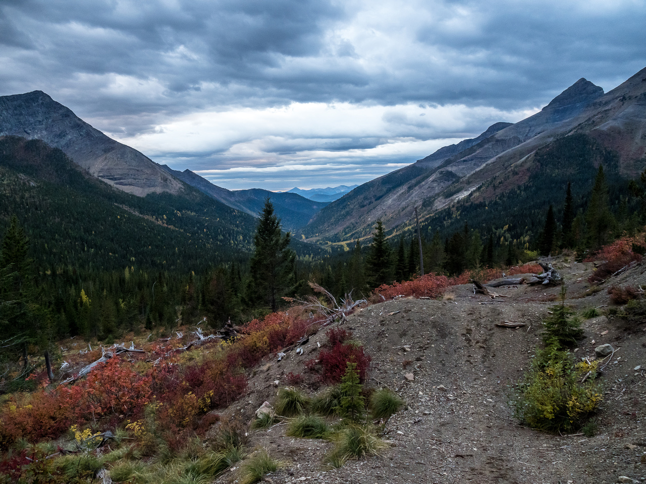 Finally on the dirt track heading back up to the pass, looking back down Middlepass Creek with Mount Krowicki rising at right.