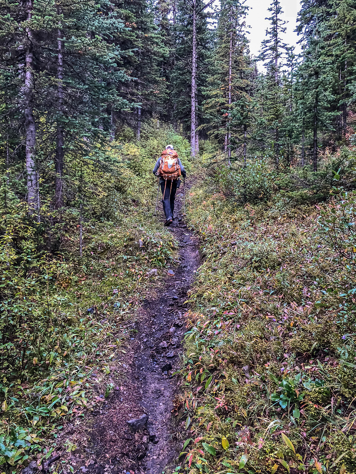 Hiking along a soaking wet GDT thanks to early morning showers.