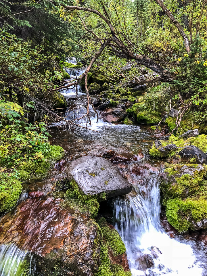 Streams along the GDT provide welcome sources of fresh water even this late into a dry summer.