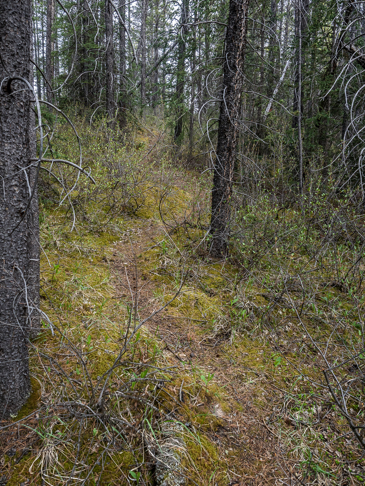 A good trail through the short forested bits.