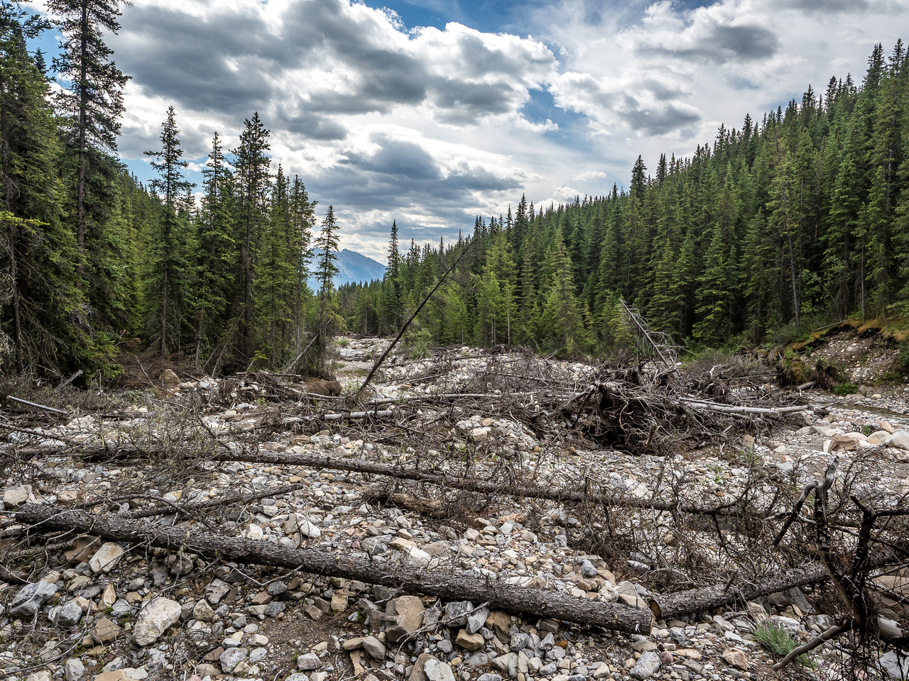 The 2013 floods had a dramatic impact on many streams in the Rockies, including Whitegoat.