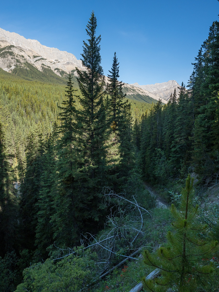 The trail plunges down towards Whitegoat Creek. Bright Star visible now in the distance, Stelfox at left.