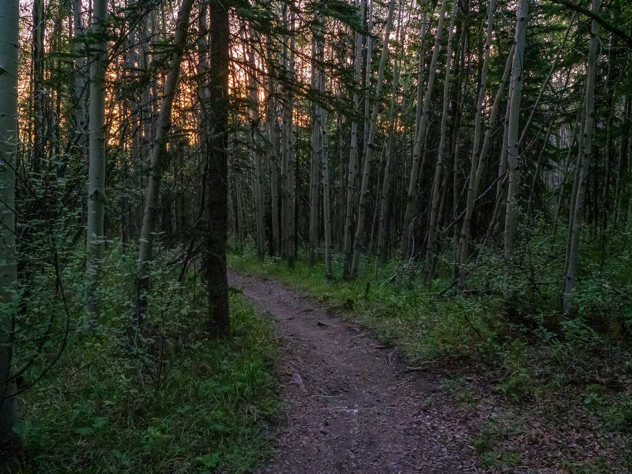 A lovely 05:00 morning hike in the forest along the Cline River Trail.