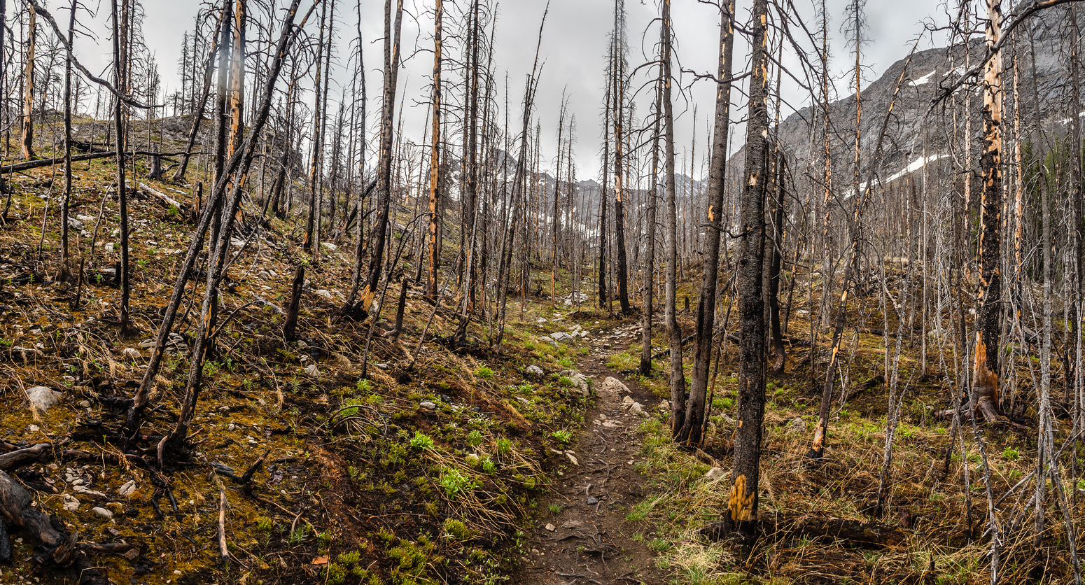 The South Buller Pass trail is lovely - especially the section through the recently burned out forest.
