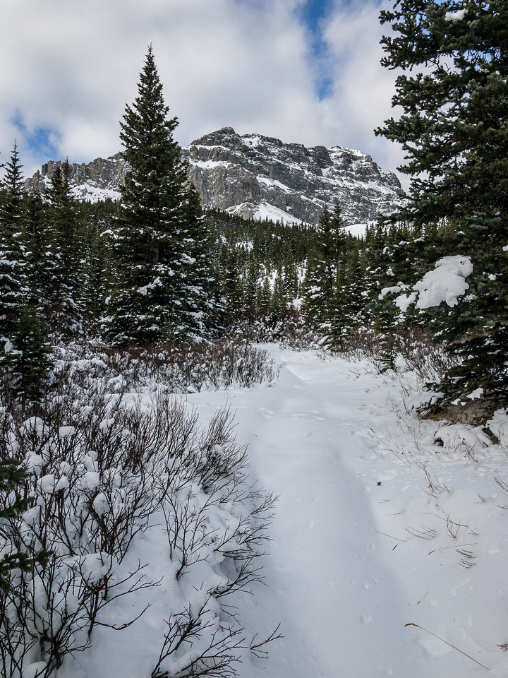 Even with no recent tracks and fresh snow, the trail was pretty darn obvious.