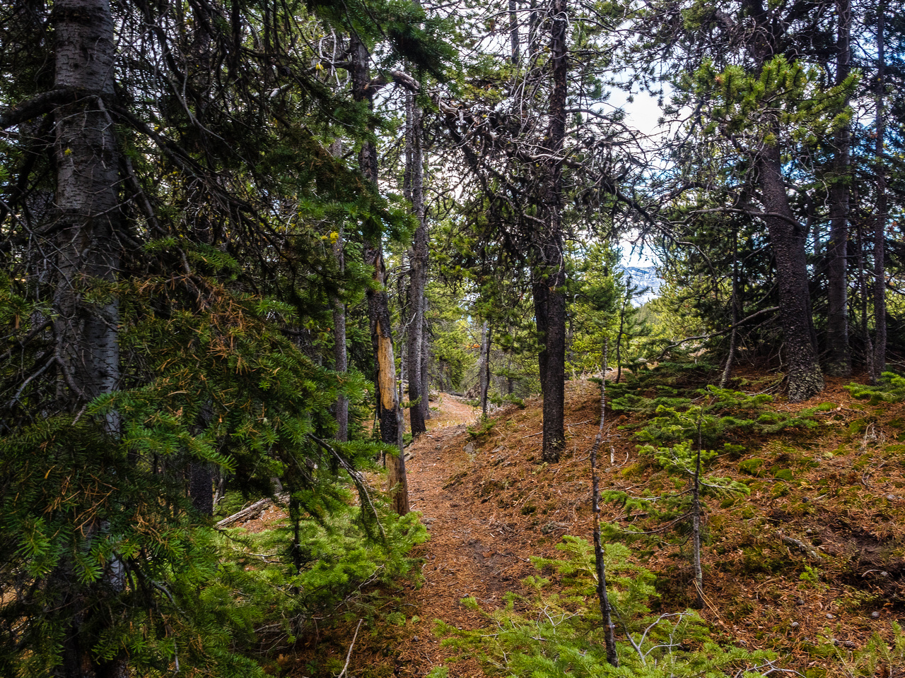 There's no obvious trail, but there is a track I'm following through the light forest.