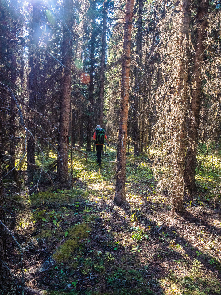 An open forest made for pleasant travel back down to the trail.