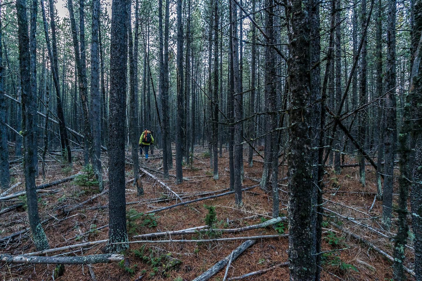 Classic Castle Wilderness matchstick forest