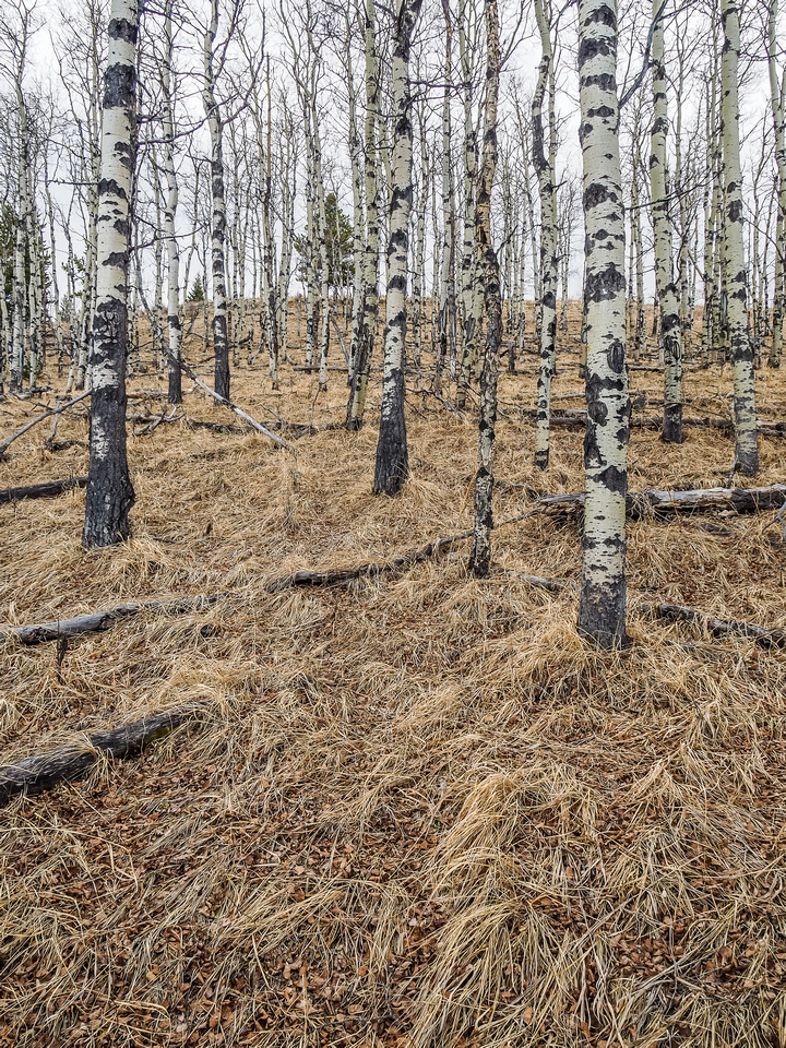 I love these aspen forests and the grassy slopes that usually accompany them.