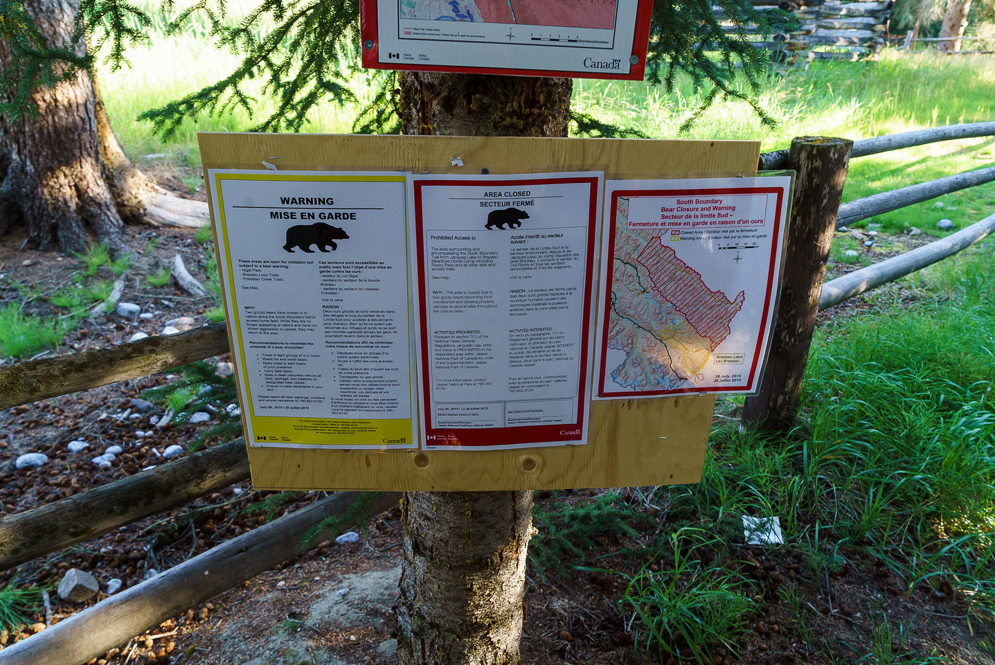 The South Boundary Trail is a full closure thanks to two young grizzlies who have acquainted themselves with human food.