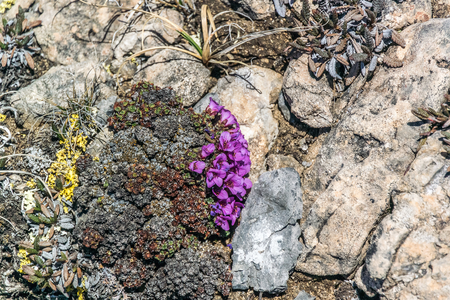I was very surprised to see flowers in the alpine already!