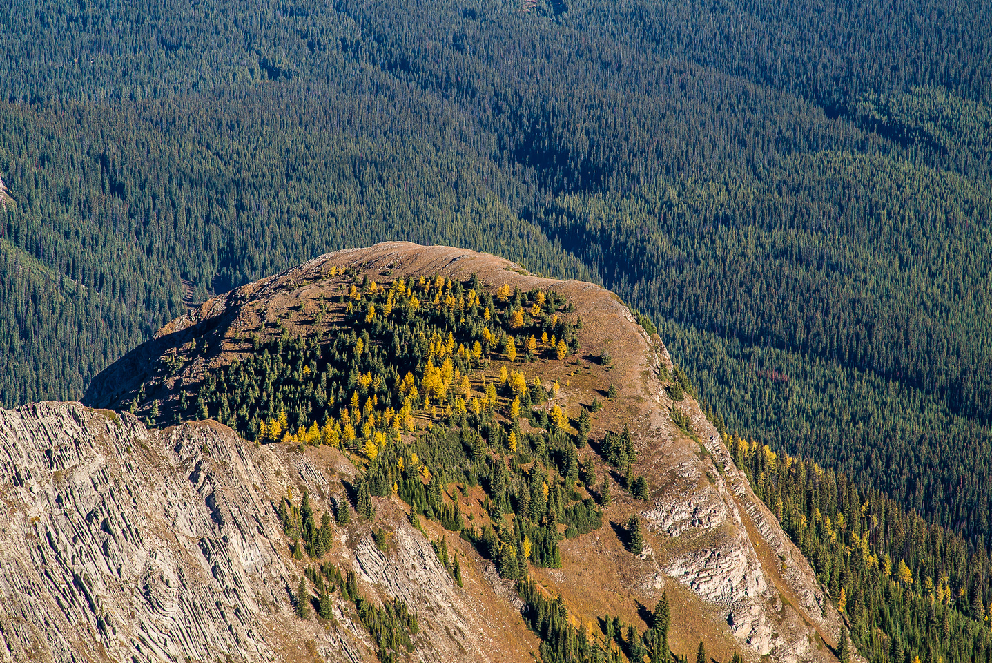 Fall color on a buttress to the northeast.