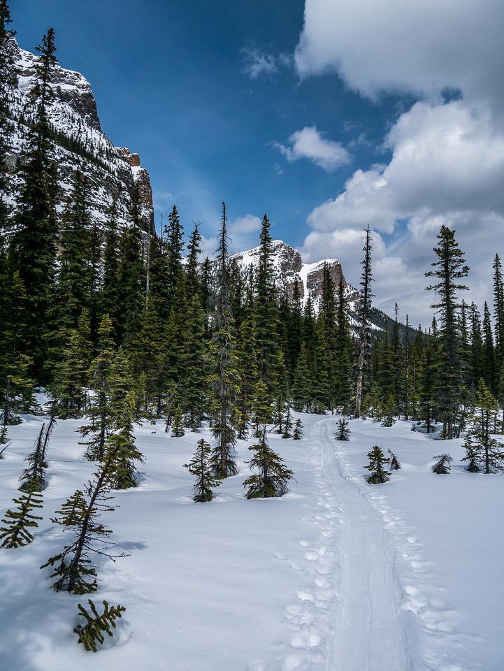 Skiing along Paradise Creek.
