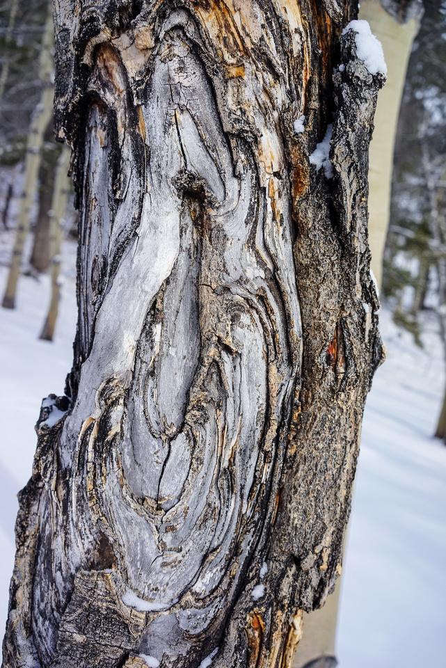 Tree Patterns.