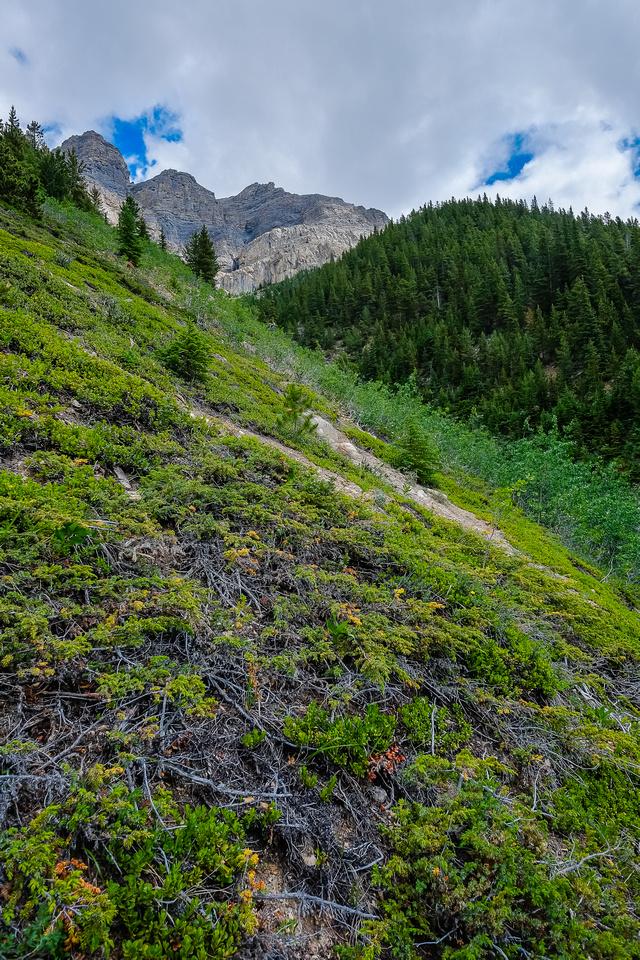 Grassy slopes.