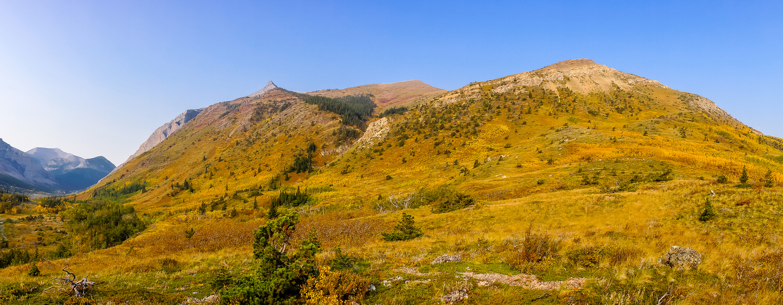 Looking up the lower grassy slopes of Pincher Ridge. The summit is JUST visible peaking over at center left.