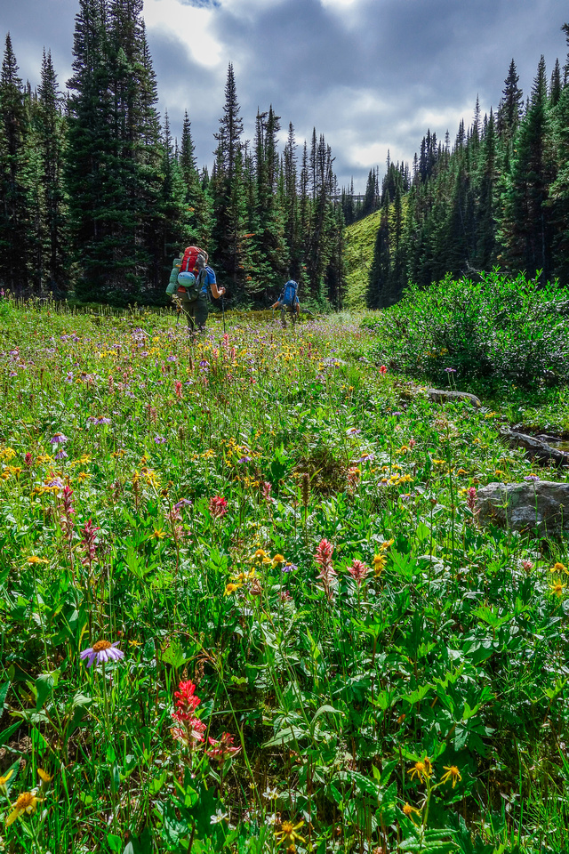 After the fifth lake we went through carpets of wild flowers to reach the alpine meadows beyond.