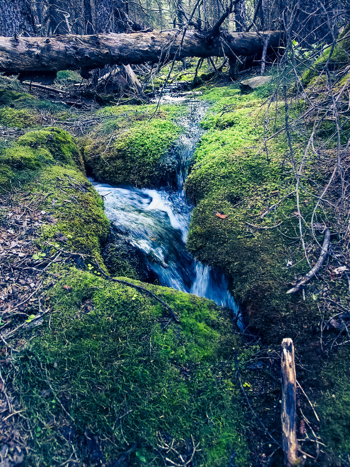 Gorgeous carpets of moss near Spencer Creek.
