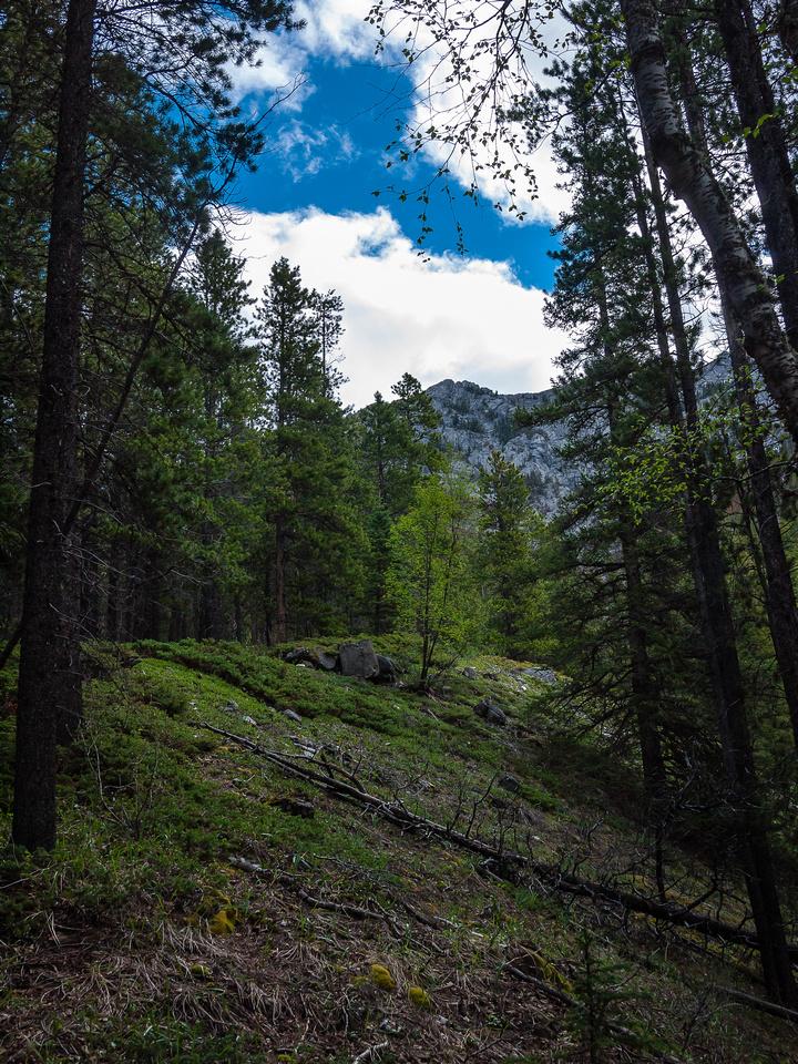 Pleasant hiking towards the ridge.
