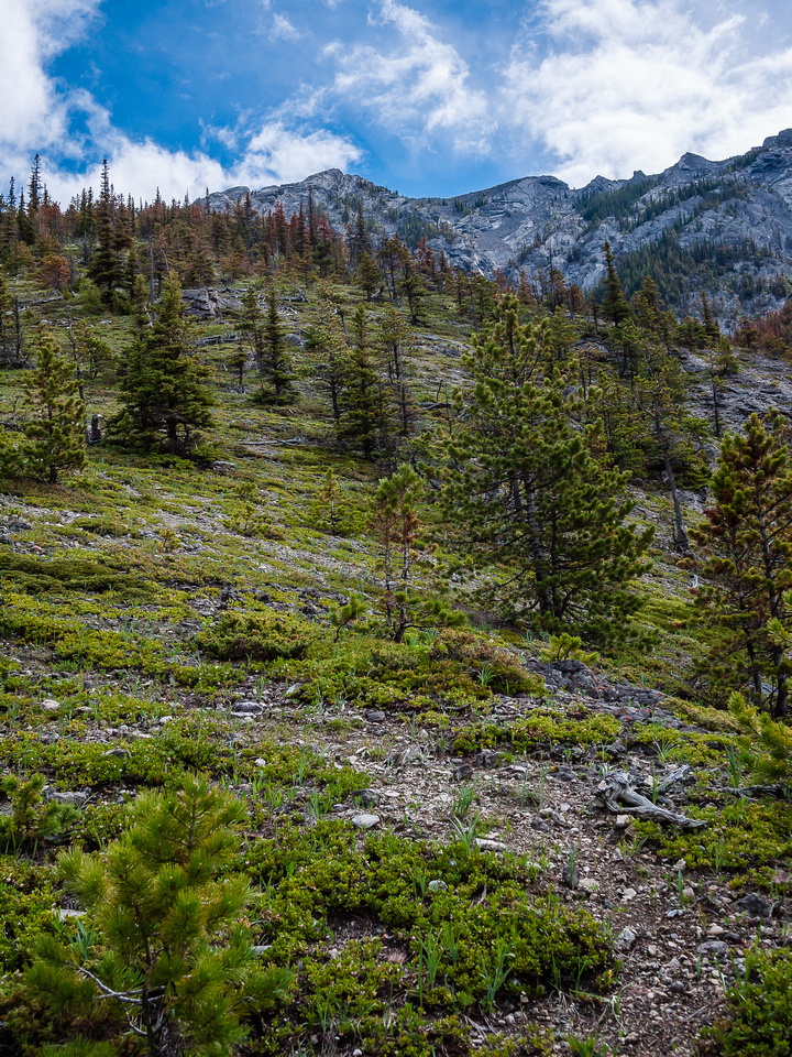 Scree slog to the ridge - note the orange trees above which is pine beetle damage.