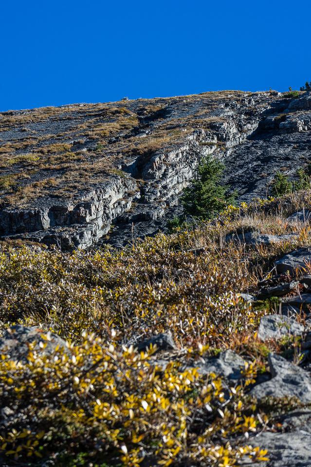 Ascent slopes steepen near treeline.